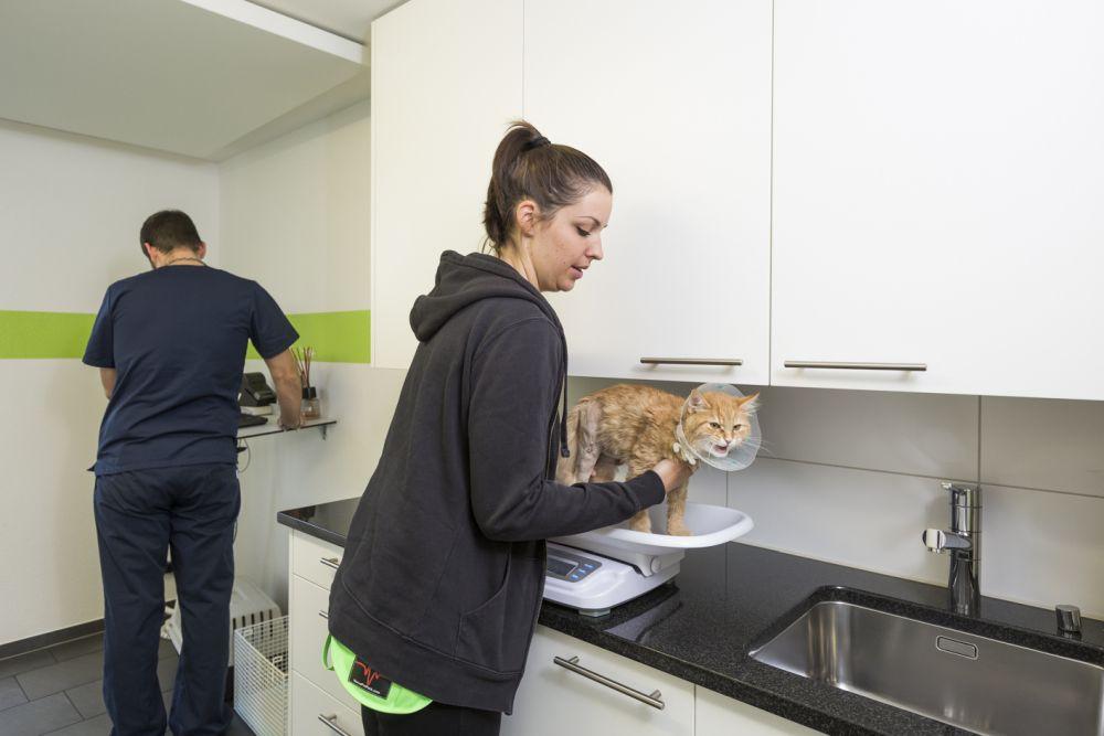 Schwangerschaft bei Katzen - Katze auf Waage