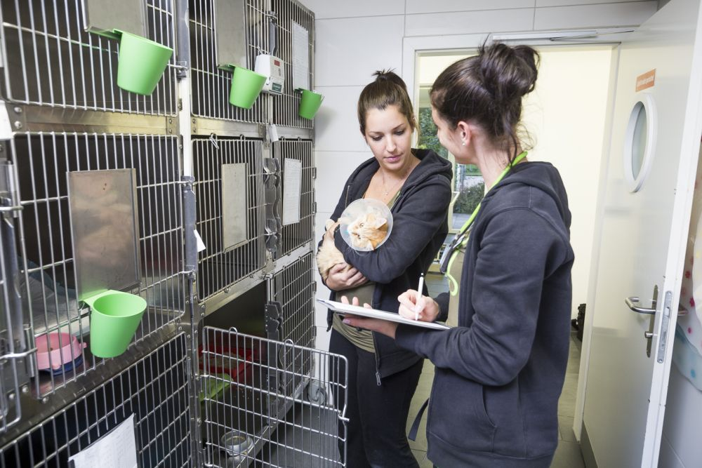 Kastration von Katzen und Katern - Katze mit Schutzkragen