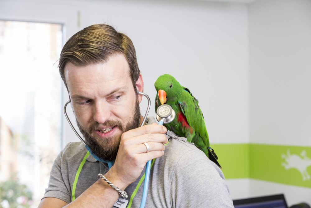 Papagei Untersuchung mit Stethoskop