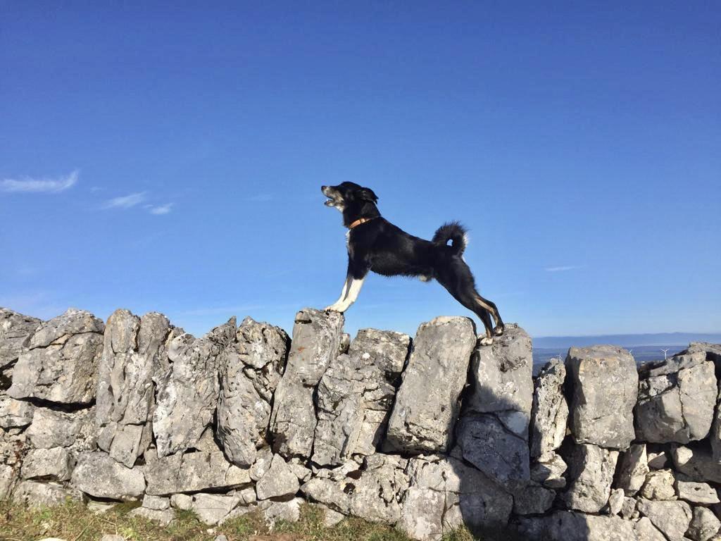 Hund steht in den Ferien auf einem Felsen