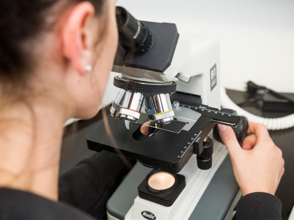 Claudia Senn untersucht das Blut nach Parasiten mit dem Mikroskop