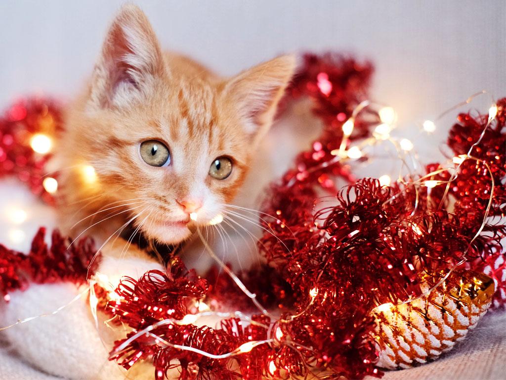 Katzenbaby knabbert an Lichterkette und liegt in Lametta