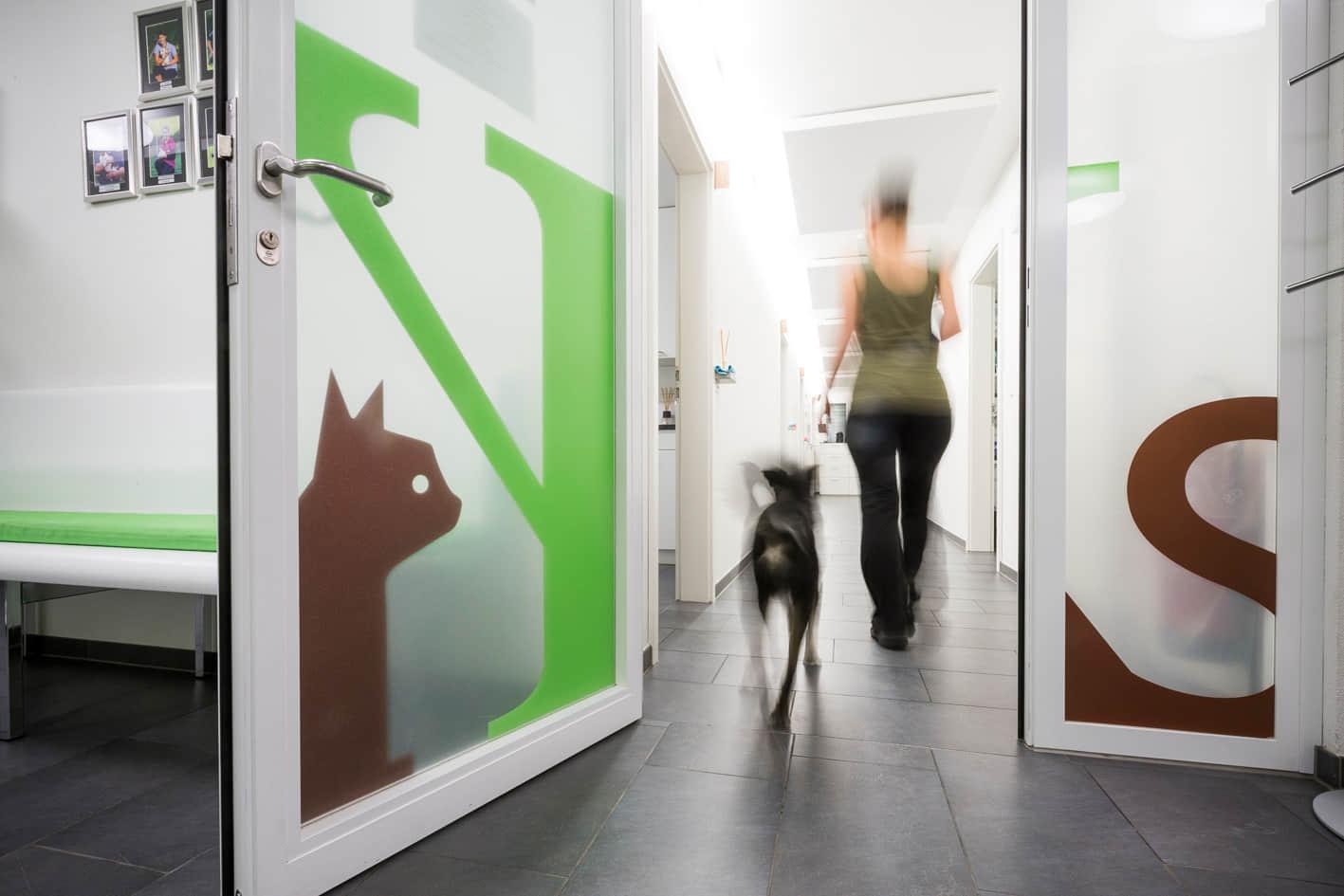 Tierphysiotherapie - Tier in Bewegung