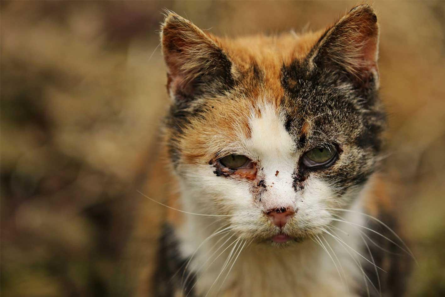 Katze mit Katzenschnupfen Symptome