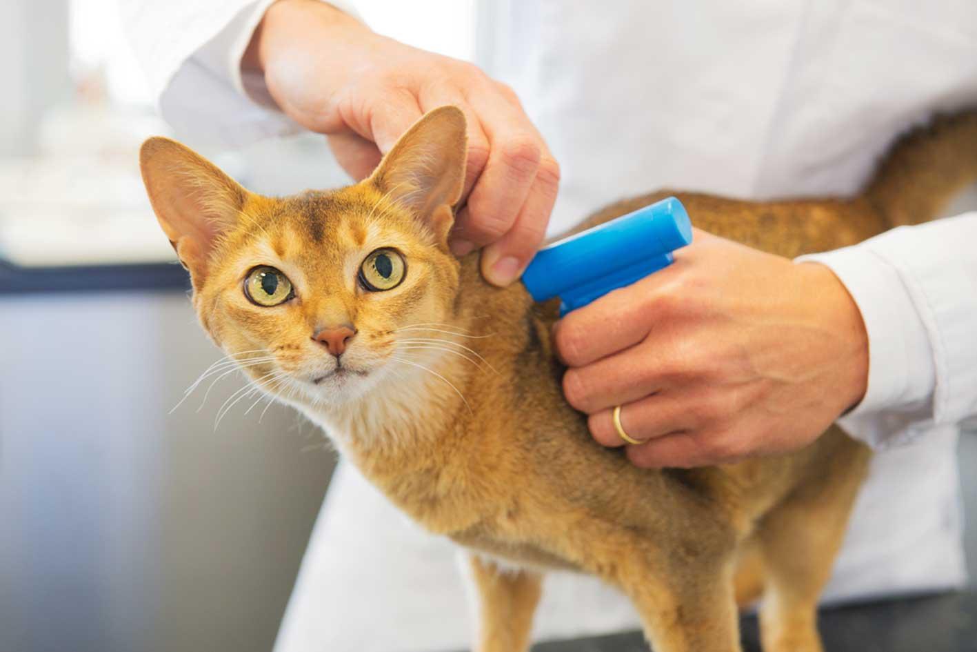 Katze wird gechipped