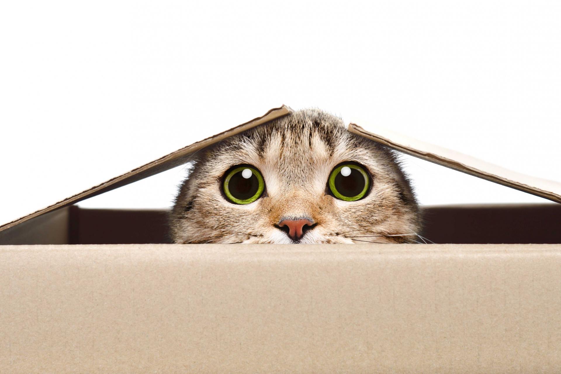 Eine Katze guckt aus einer Kartonbox