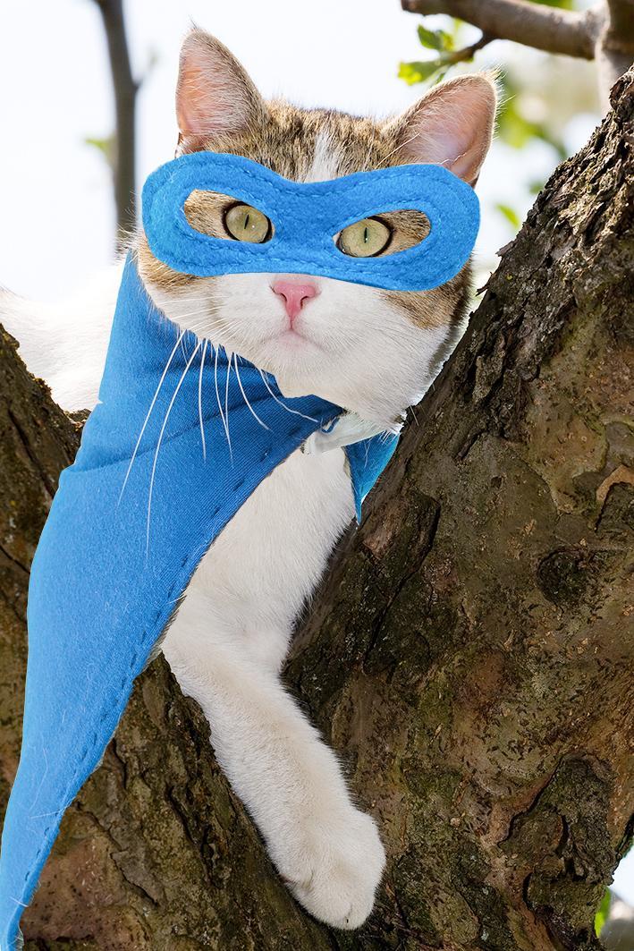 Der Kater Fiou sitzt auf dem Baum in seinem Supercat Kostüm mit blauer Filz Gesichtsmaske und blauem Filz Umhang