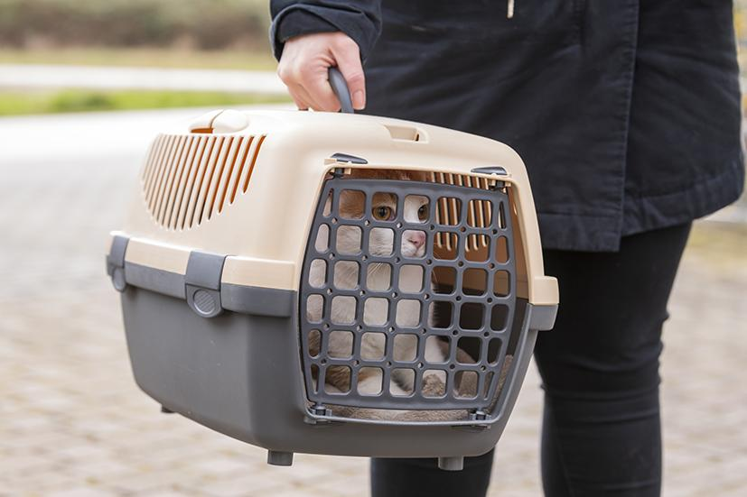 Kater Filou wird in der Transportbox zur Kleintierklinik S.AG gefahren
