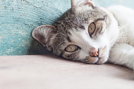Ältere Katze liegt am Boden
