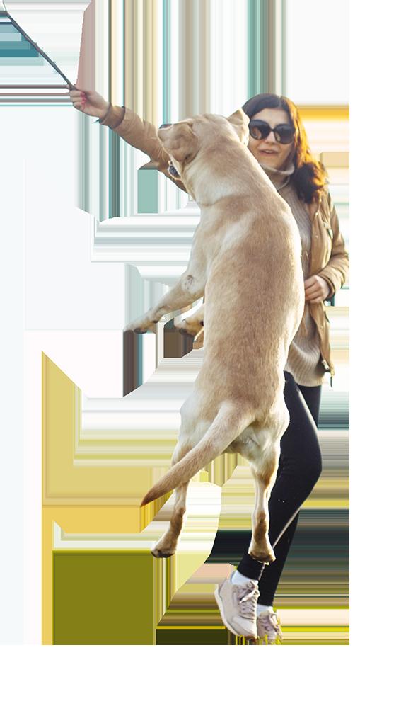Labradorhündin Luna springt hoch hinaus und versucht den Stock zu erreichen, welche ihr Frauchen in die Luft hält