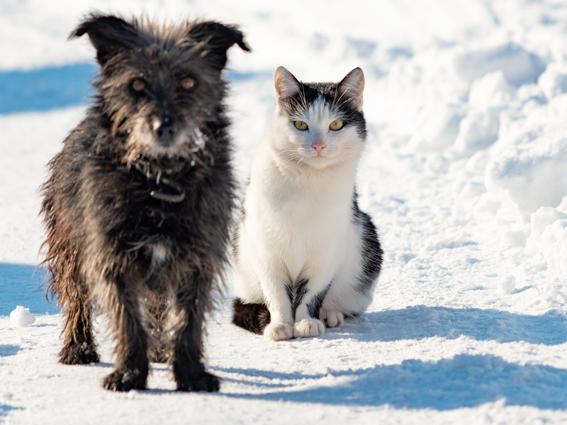 Wintertipps für Katzen und Hunde