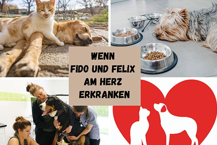 Fotocollage mit einem liegenden Hund und einer Katze die auf ihm liegt, Terrier liegt neben seinem Futternapf, Hund wird Blut abgenommen, Herz mit einer Katze und Hund Ausschnitt
