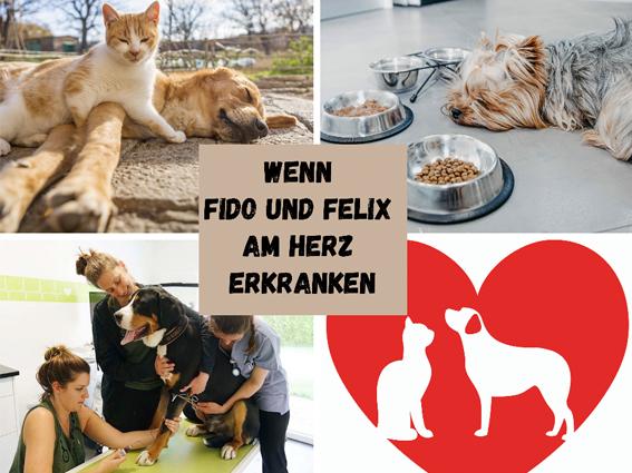 Herzerkrankungen bei Hund und Katze